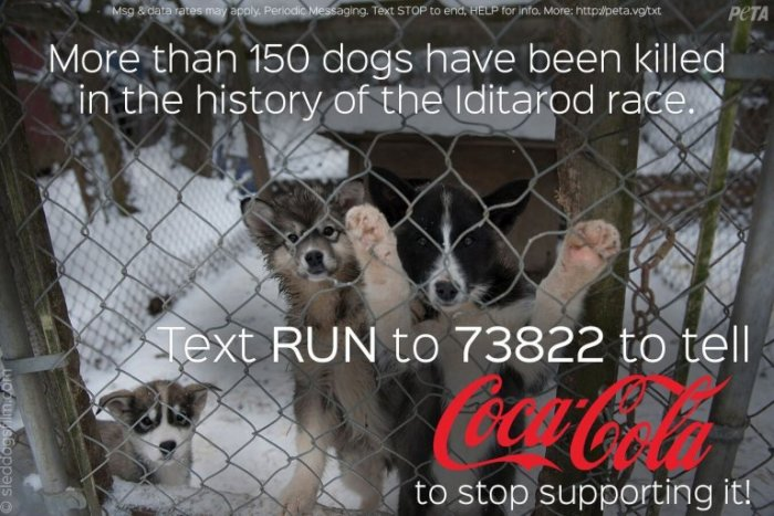 Iditarod-Text-In-PETA-768x513.jpg